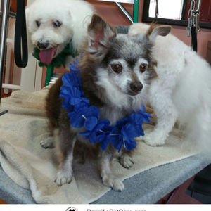 Photo for Max & Bruiser's mom - AnnMarie H