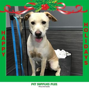 Francisca at Pet Supplies Plus - Crystal Lake