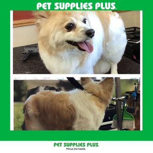 Honeys m at Pet Supplies Plus - Lake in the Hills