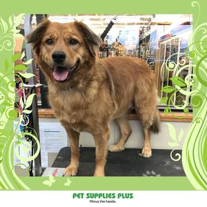 Chloe at Pet Supplies Plus - Lake in the Hills