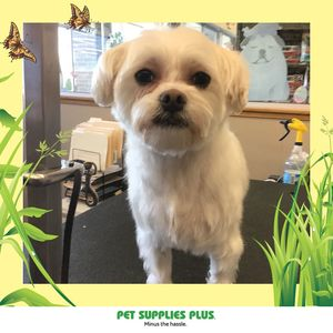 Luann G at Pet Supplies Plus - Montgomery
