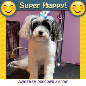 Lori at Another Doggone Salon