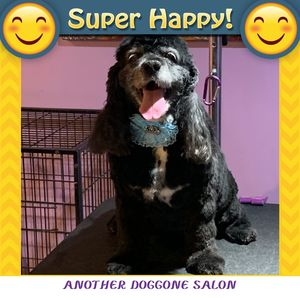 Ruth at Another Doggone Salon