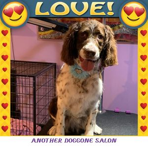 Rachel F at Another Doggone Salon