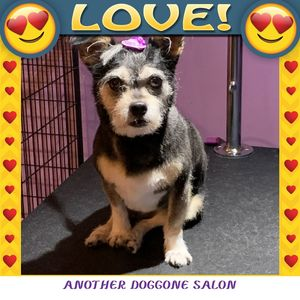 Mimi at Another Doggone Salon