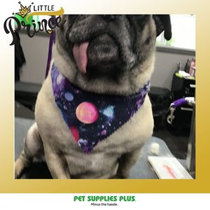 Goding at Pet Supplies Plus - Villa Park