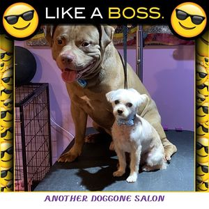 Katrina R at Another Doggone Salon