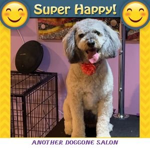 Tammy at Another Doggone Salon