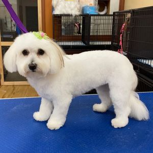 Nancy at TigerLily's Dog Grooming