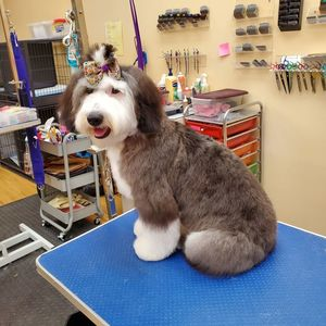 Rich P at TigerLily's Dog Grooming