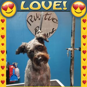 Lisa H at Rustic Paws