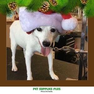 Overton F at Pet Supplies Plus - Montgomery