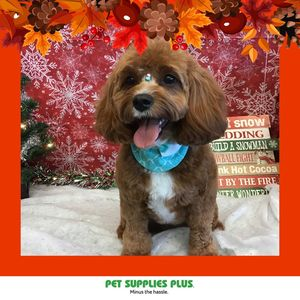 Figueras at Pet Supplies Plus - Montgomery