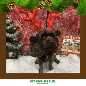 Simmons F at Pet Supplies Plus - Montgomery