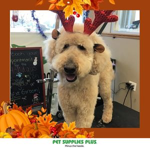 Mark M at Pet Supplies Plus - Montgomery