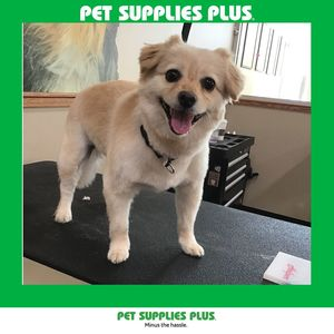 Jan H at Pet Supplies Plus - Plainfield