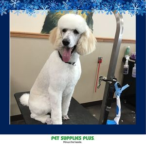Cyndi S at Pet Supplies Plus - Plainfield
