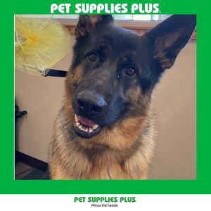 Anita b at Pet Supplies Plus - Plainfield