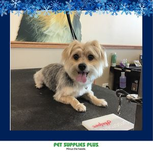 Danny c at Pet Supplies Plus - Plainfield